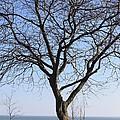 Beach Tree by Rebecca Frank