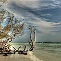 Beach Tree by Sean Allen