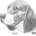 Beagle by Jim Hubbard