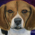 Beagle Puppy by Michelle Wrighton