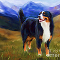 Bear - Bernese Mountain Dog by Michelle Wrighton