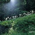Bear-grass Ridge by Sharon Elliott