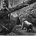 Bear Hunt, 1876 by Granger