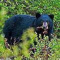 Bear by Krisztina Harasztosi