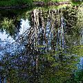 Bear River Reflection by Tony and Kristi Middleton