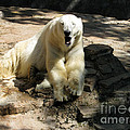 Bearly Staying Awake. Yaaaaawwwnn... by Ausra Huntington nee Paulauskaite