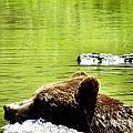 Bearly Swim by Art Dingo