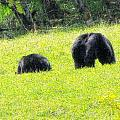 Bears In A Peaceful Meadow1 by Marie Jamieson