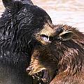 Bears In Water by Carson Ganci