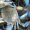 Beaufort Blue Crabs by Patricia Greer