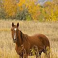 Beautiful Chestnut Horse by James BO  Insogna