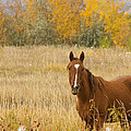 Beautiful Grazing Horse by James BO  Insogna