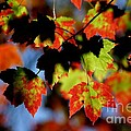 Beautiful Autumn by Living Color Photography Lorraine Lynch