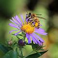 Beautiful Bee by Doris Potter