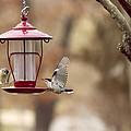 Beautiful Birds by Linda Tiepelman