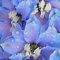 Beautiful Blue Flowers by Ann Caroline Bendiksen