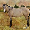 Beautiful Buckskin by Betty LaRue