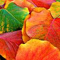 Beautiful Fall Leaves  by Sheila Kay McIntyre