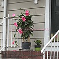 Beautiful Floral Entrance by Sonali Gangane