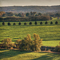 Beautiful Landscape With Trees And Field by Fsn