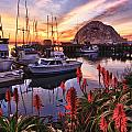 Beautiful Morro Bay by Beth Sargent