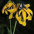 Beautiful Moths Ser1 by Amara Roberts