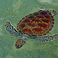 Beautiful Sea Turtle by Stacey Robinson