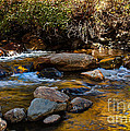 Beautiful Stream by Robert Bales