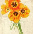 Beautiful Tulips by Darren Fisher