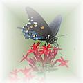 Beauty Flies by Judy Hall-Folde