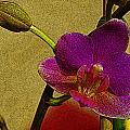 Beauty In Bloom by Teri Schuster