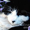Beauty Sleep by Elinor Mavor