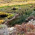 Beaver Dam  by L J Oakes