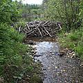 Beaver Dam by Ted Kinsman
