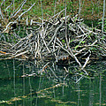 Beaver House by Nancy Griswold