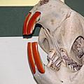 Beaver Teeth by LeeAnn McLaneGoetz McLaneGoetzStudioLLCcom