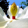Bed Of Magnolia by Karen Wiles