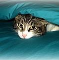 Bed Time by Desiree Lyon