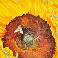 Bee And Sunflowers by Terry Arroyo Mulrooney