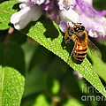 Bee At Work by Kaye Menner