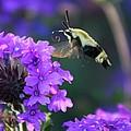 Bee Fur-eal by Phil Cappiali Jr