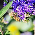 Bee Happy by Michael Frank Jr