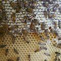 Bee Hive by Nina Fosdick