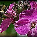 Bee On A Flower by Dawn Harris