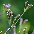 Bee On End by Kathy Gibbons