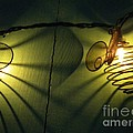 Bee Reflections by Rainey Daze