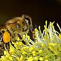Bee by Tilen Hrovatic