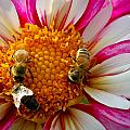 Bee Time by Jean Noren