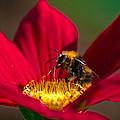 Beebot by Stwayne Keubrick