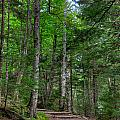 Beech Mountain Trail Acadia by Steve Gadomski